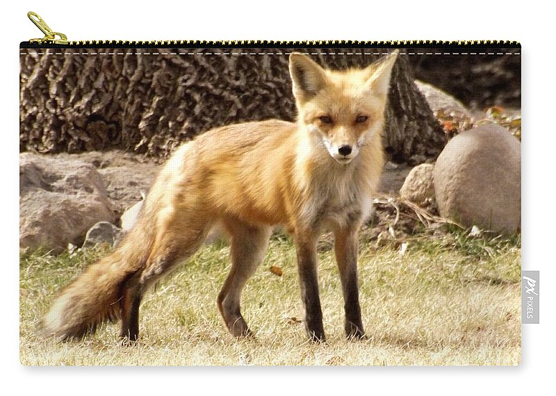 Deb Schense Carry-all Pouch featuring the photograph Foxy Momma by Deb Schense