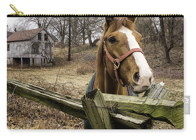 Horse Carry-all Pouch featuring the photograph Friendly Horse by Fran Gallogly