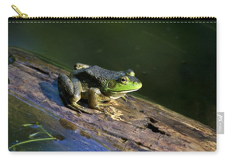 Bullfrog Carry-all Pouch featuring the photograph Frog On A Log by Christina Rollo
