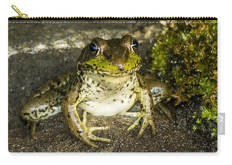 Frog Carry-all Pouch featuring the photograph Frog Pose by Richard Kitchen
