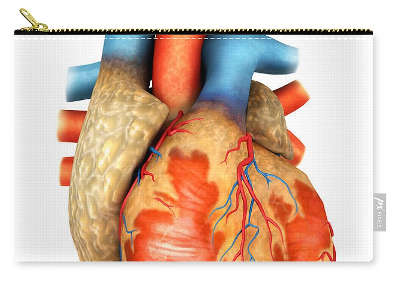 Front View Of Human Heart Carry-all Pouch for Sale by Stocktrek Images