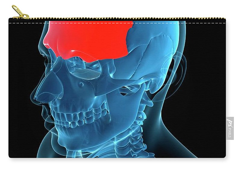 Anatomy Carry-all Pouch featuring the digital art Frontal Bone, Artwork by Sciepro