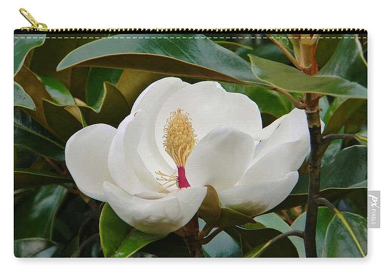 Magnolia Carry-all Pouch featuring the photograph Full Bloom by Jean Goodwin Brooks