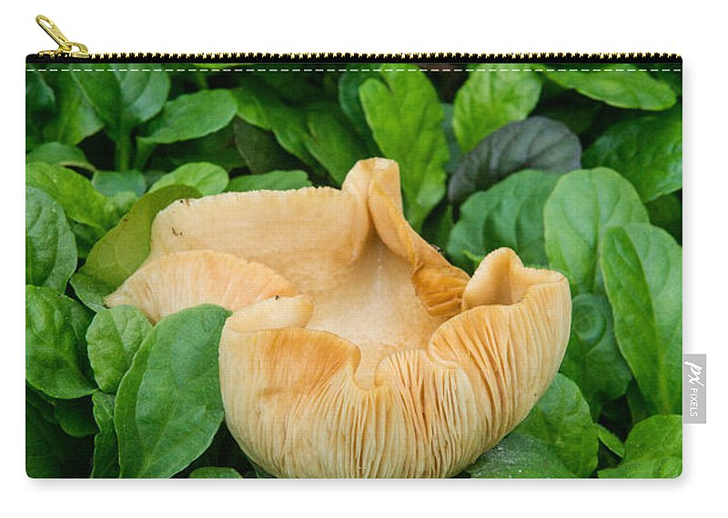 Ajuga Carry-all Pouch featuring the photograph Fungus Among The Ajuga by Douglas Barnett