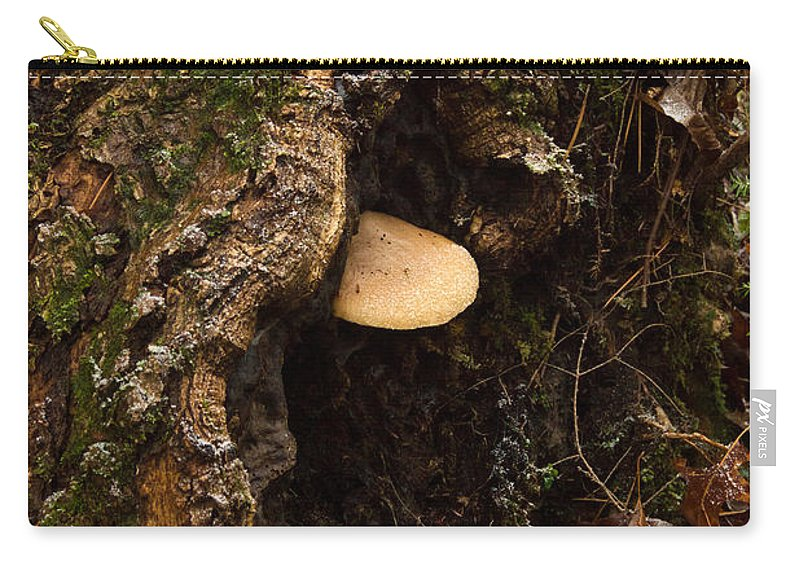 Fungi Carry-all Pouch featuring the photograph Fungus In Stump Hole by Douglas Barnett