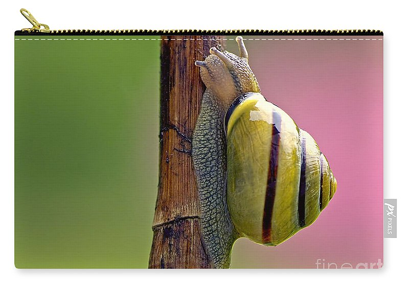 Garden Snail Carry-all Pouch featuring the photograph Garden Snail Bright by Sharon Talson