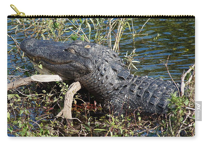 Alligator Gator Everglades National Park Florida Carry-all Pouch featuring the photograph Gator On A Stick by John Wall