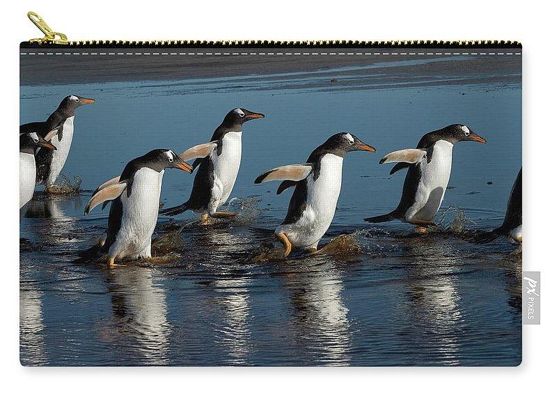 Color Image Carry-all Pouch featuring the photograph Gentoo Penguins Walking by Hiroya Minakuchi