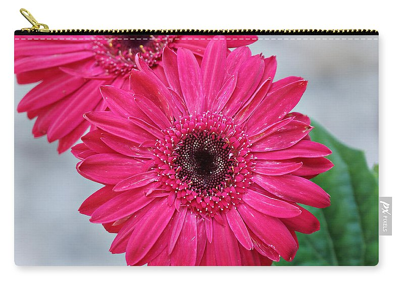 Gerbera Daisy Carry-all Pouch featuring the photograph Gerbera Daisy by Sandy Keeton