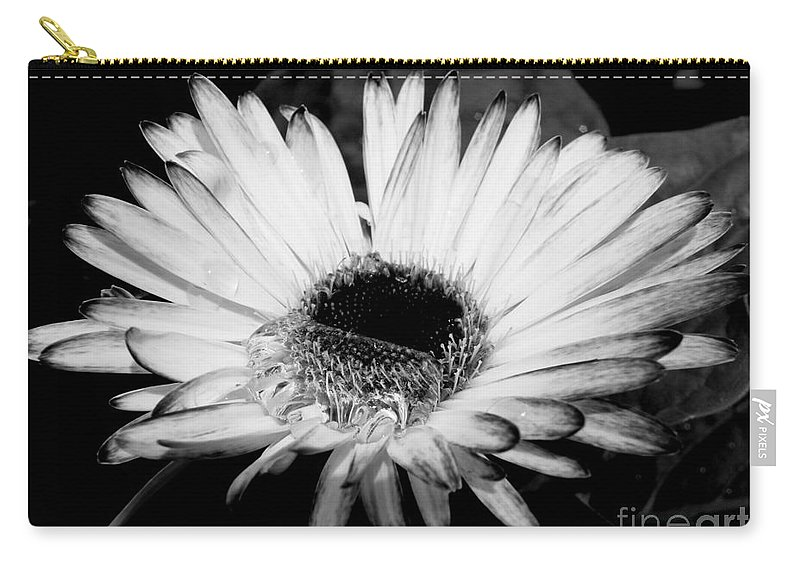 Gerbera Daisy Carry-all Pouch featuring the photograph Gerbera In Black And White by Kitrina Arbuckle