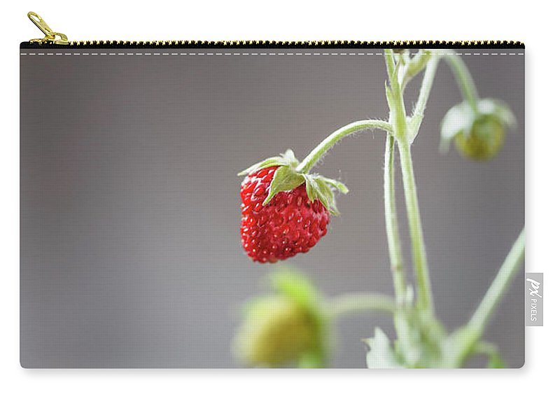 Wild Strawberry Carry-all Pouch featuring the photograph Germany, Baden Wuerttemberg, Wild by Westend61