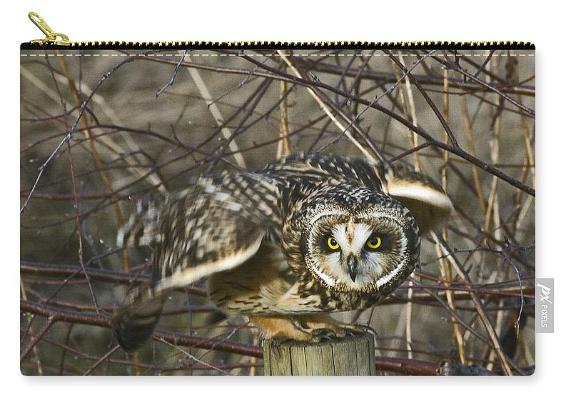 Short Eared Owl Carry-all Pouch featuring the photograph Get Ready by Rob Mclean