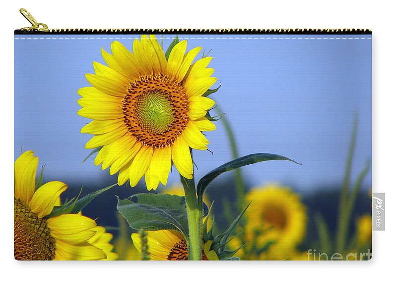 Sunflower Carry-all Pouch featuring the photograph Getting to the sun by Amanda Barcon
