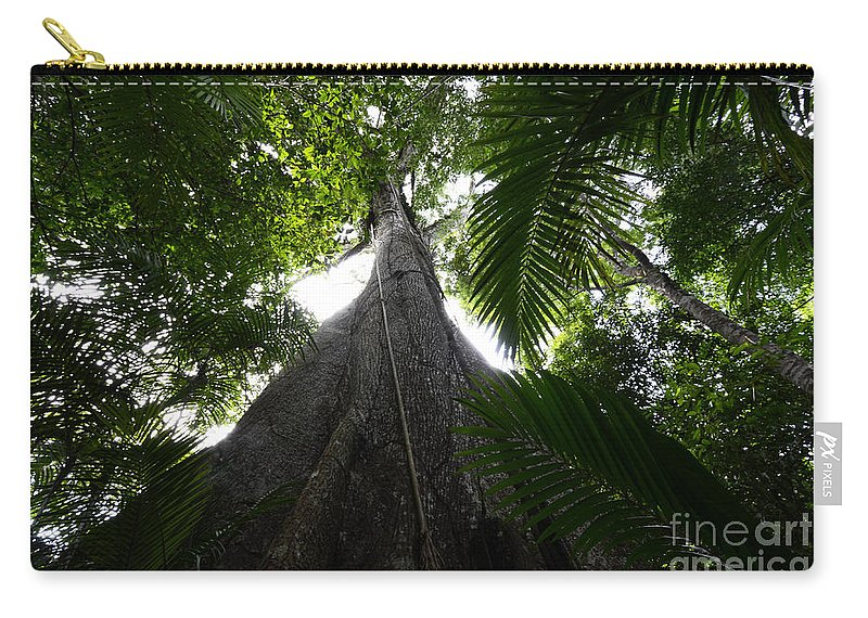 Tree Carry-all Pouch featuring the photograph Giant Cashew Tree Amazon Rainforest Brazil by Bob Christopher