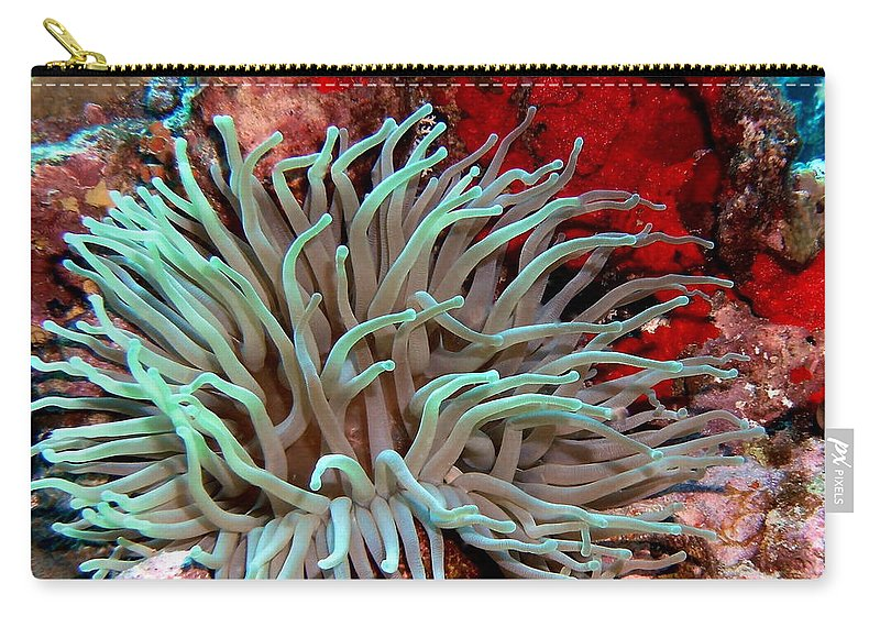 Nature Carry-all Pouch featuring the photograph Giant Green Sea Anemone Against Red Coral by Amy McDaniel