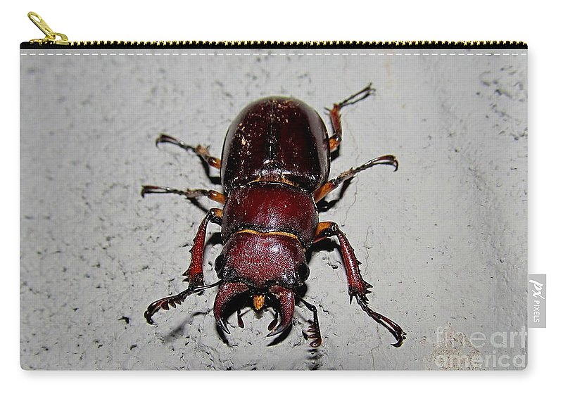 Female Giant Stag Beetle Photographs Maryland Beetles North American Beetles Maryland Entomology Giant Beetles Of North America Nocturnal Insects Predatory Insects Maryland Biodiversity Seasonal Forest Creatures Cool Critters Big Burgundy Beetle Large Maroon Beetle Insects With Giant Pinchers Natural Science Protect Mature Forest Biodiversity Carry-all Pouch featuring the photograph Giant Stag Beetle by Joshua Bales