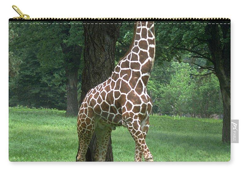 Giraffe Carry-all Pouch featuring the photograph Giraffe by Gary Gingrich Galleries