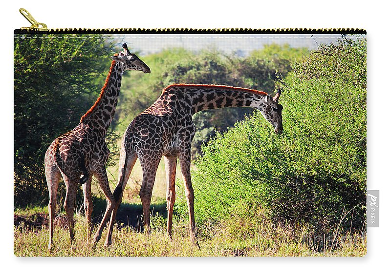 Giraffe Carry-all Pouch featuring the photograph Giraffes On Savanna Eating. Safari In Serengeti by Michal Bednarek