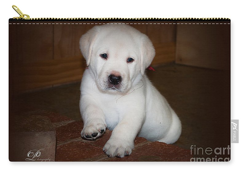 Labrador Carry-all Pouch featuring the photograph Give Me Your Paw by Photos By Cassandra