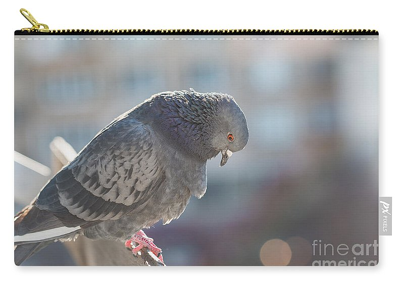 Animal Carry-all Pouch featuring the photograph Glance From Above by Jivko Nakev