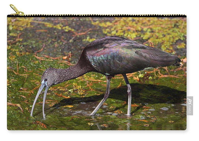 Ibis Carry-all Pouch featuring the photograph Glossy Ibis by Bruce J Robinson