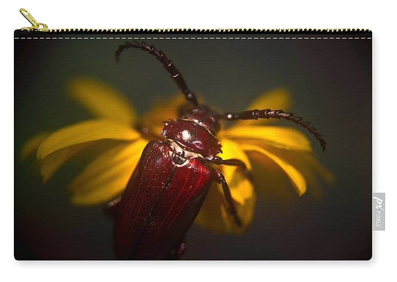 Glowing Carry-all Pouch featuring the photograph Glowing Beetle by Douglas Barnett