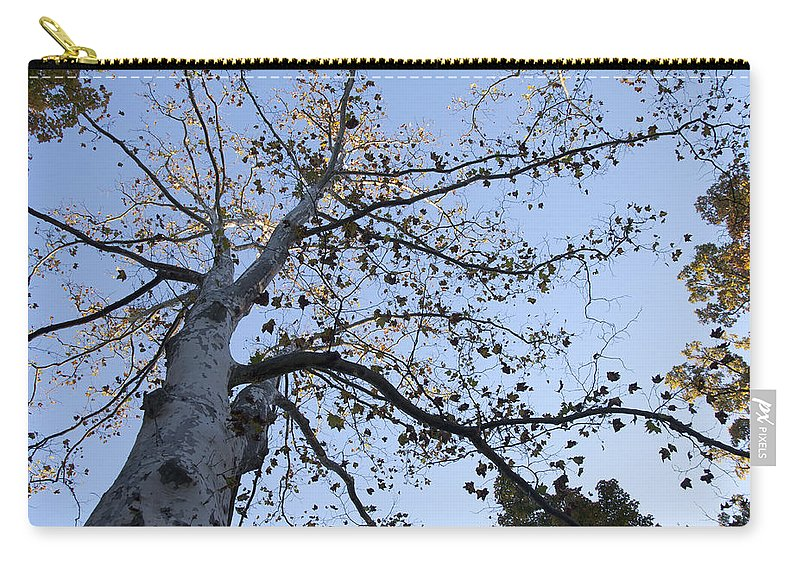 Go Climb A Tree Carry-all Pouch featuring the photograph Go Climb A Tree by Bill Cannon