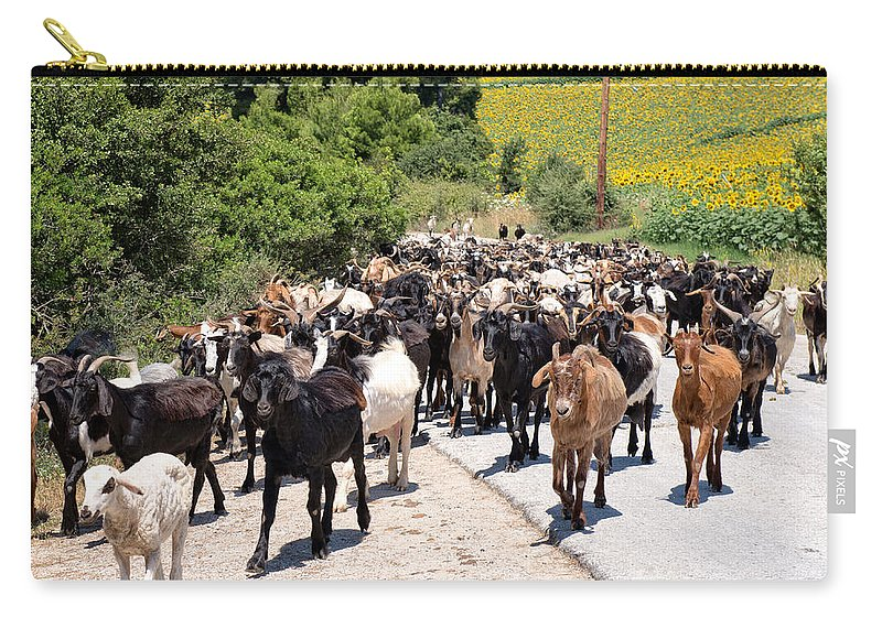 Capra Aegagrus Hircus Carry-all Pouch featuring the photograph Goat Herd by Roy Pedersen