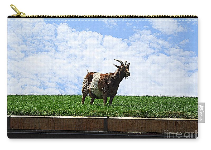 Goat On Roof Carry-all Pouch featuring the photograph Goat On A Sod Roof In Sister Bay In Wisconsin by Catherine Sherman