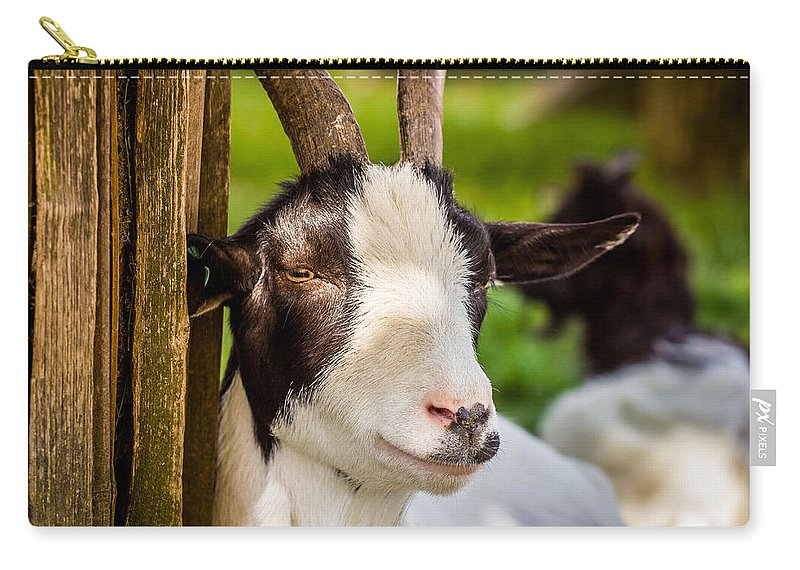 Portrait Carry-all Pouch featuring the photograph Goat Portrait by Pati Photography