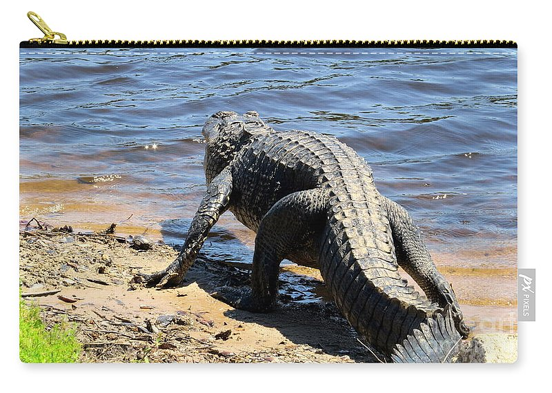 Alligators Carry-all Pouch featuring the photograph Going To Cool Off by Zina Stromberg