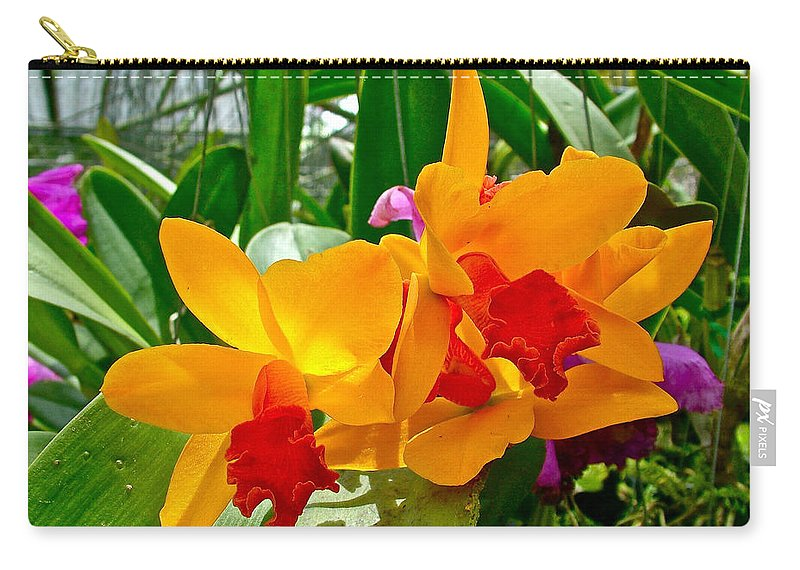 Gold And Red Orchids At Maerim Orchid Farm In Chiang Mai Carry-all Pouch featuring the photograph Gold And Red Orchids At Maerim Orchid Farm In Chiang Mai-thailan by Ruth Hager