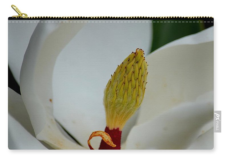 Gold Centered Magnolia Carry-all Pouch featuring the photograph Gold Centered Magnolia by Maria Urso