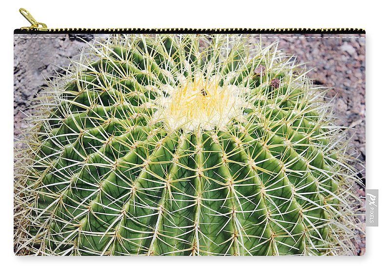 Cactus Carry-all Pouch featuring the photograph Golden Ball Cactus by Tony Murtagh