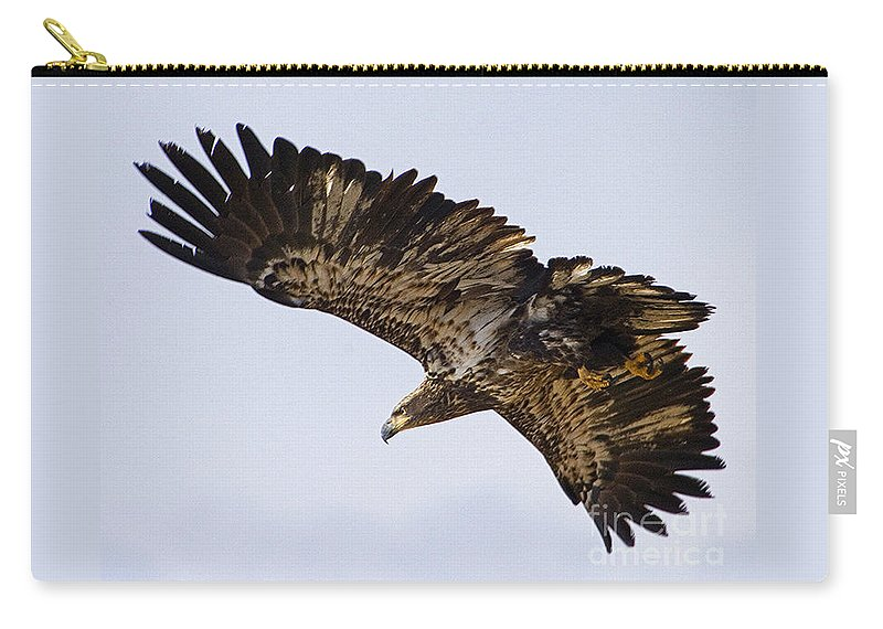Aquila Chrysaetos Carry-all Pouch featuring the photograph Golden Eagle by J L Woody Wooden