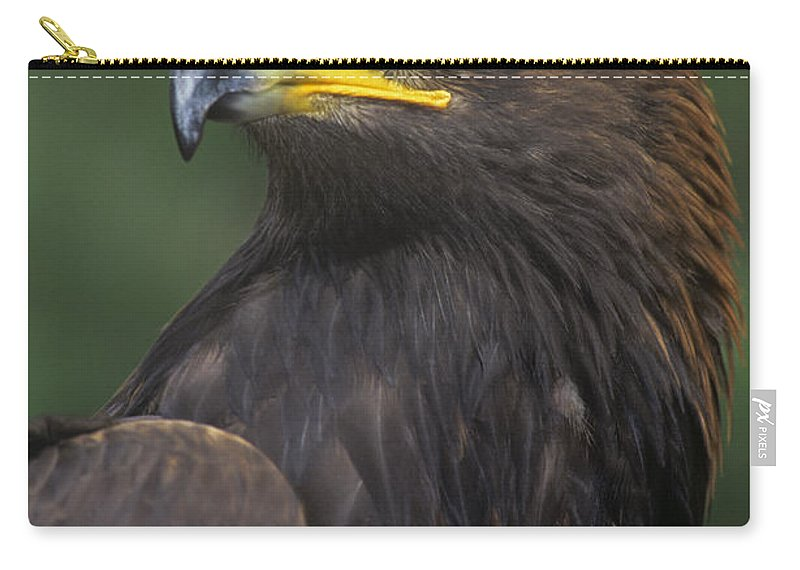 Golden Eagle Carry-all Pouch featuring the photograph Golden Eagle Portrait Threatened Species Wildlife Rescue by Dave Welling
