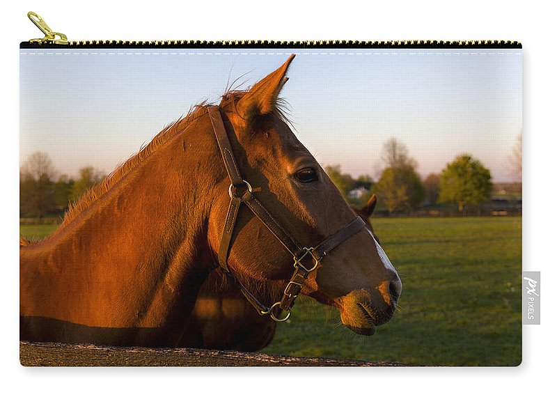 Animal Carry-all Pouch featuring the photograph Golden Light by Jack R Perry