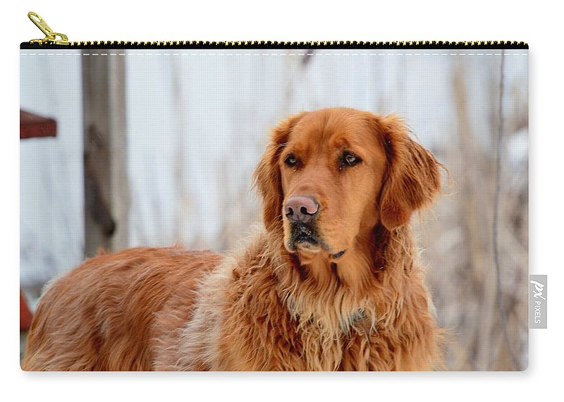 Golden Retriever Carry-all Pouch featuring the photograph Golden Nobility by Thomas Phillips