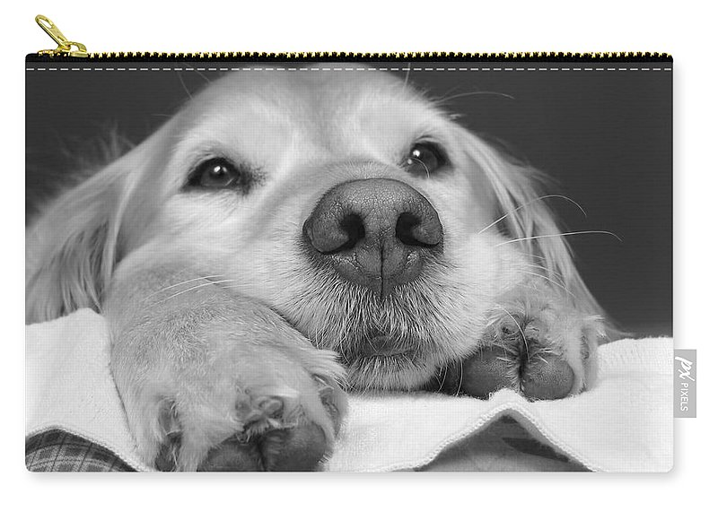 Golden Retriever Carry-all Pouch featuring the photograph Golden Retriever Dog I See You by Jennie Marie Schell