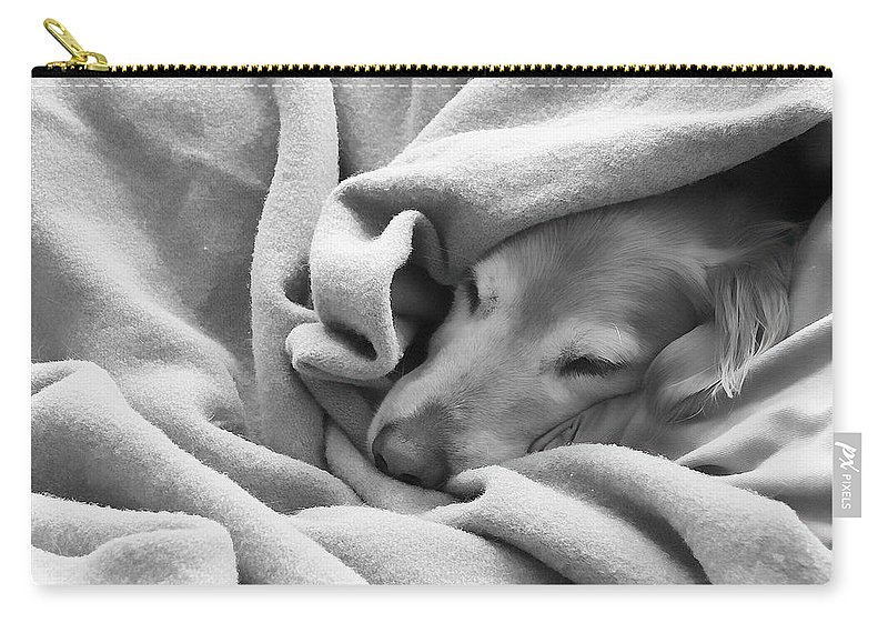 Golden Retriever Carry-all Pouch featuring the photograph Golden Retriever Dog Under The Blanket by Jennie Marie Schell