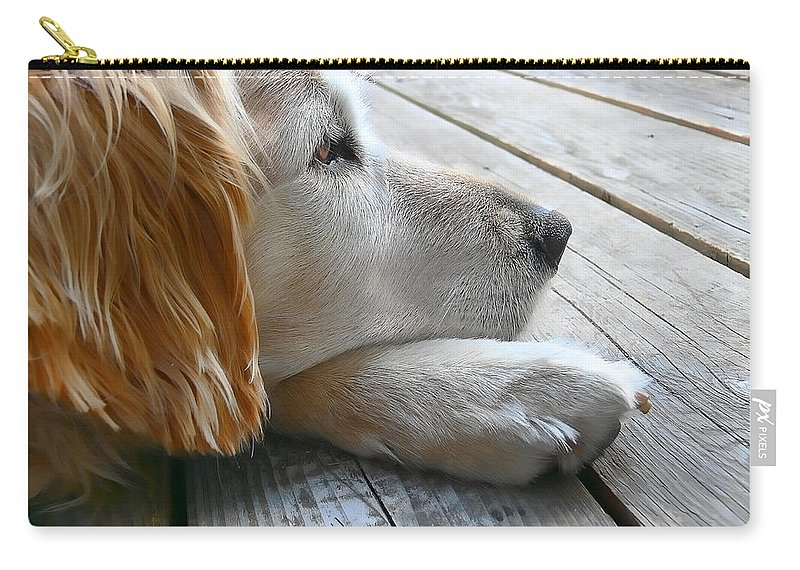 Golden Retriever Carry-all Pouch featuring the photograph Golden Retriever Dog Waiting by Jennie Marie Schell