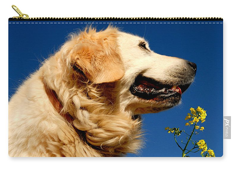 Adorable Carry-all Pouch featuring the photograph Golden Retriever by TouTouke A Y