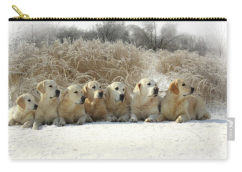 Pets Carry-all Pouch featuring the photograph Golden Retrievers by Sergey Ryumin