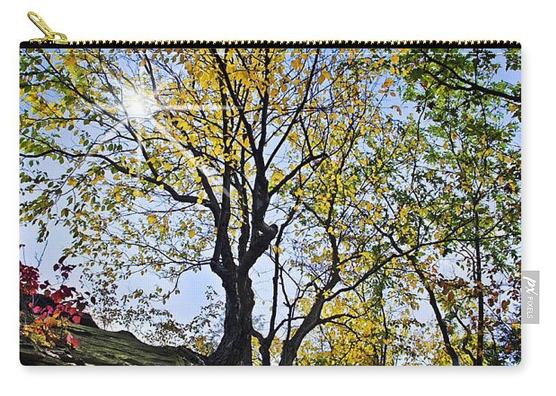 Fall Foliage Carry-all Pouch featuring the photograph Golden Tree by Christina Rollo