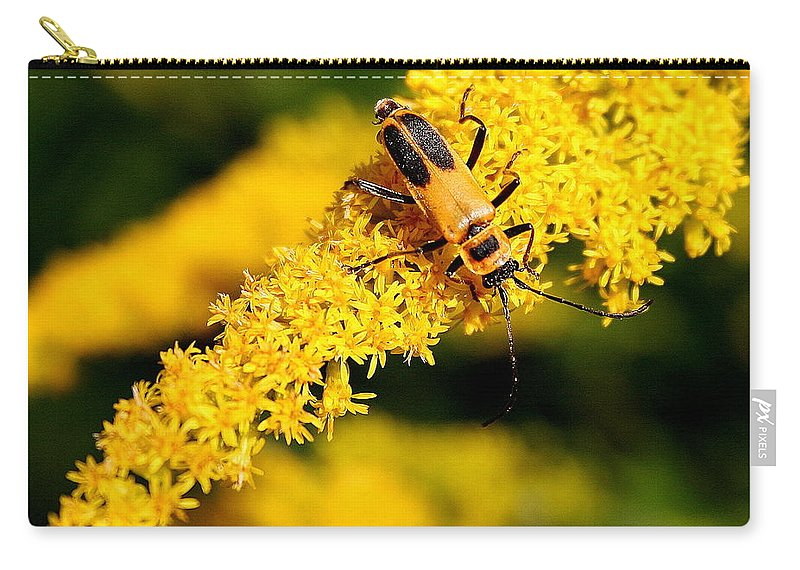 Chauliognathus Pensylvanicus Carry-all Pouch featuring the photograph Goldenrod Beetle by Laurel Talabere