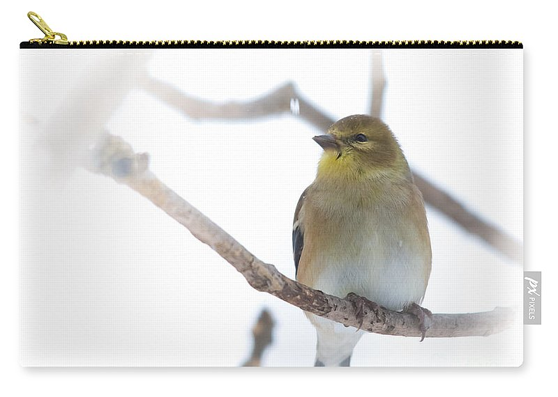 Carry-all Pouch featuring the photograph Goldfinch by Cheryl Baxter