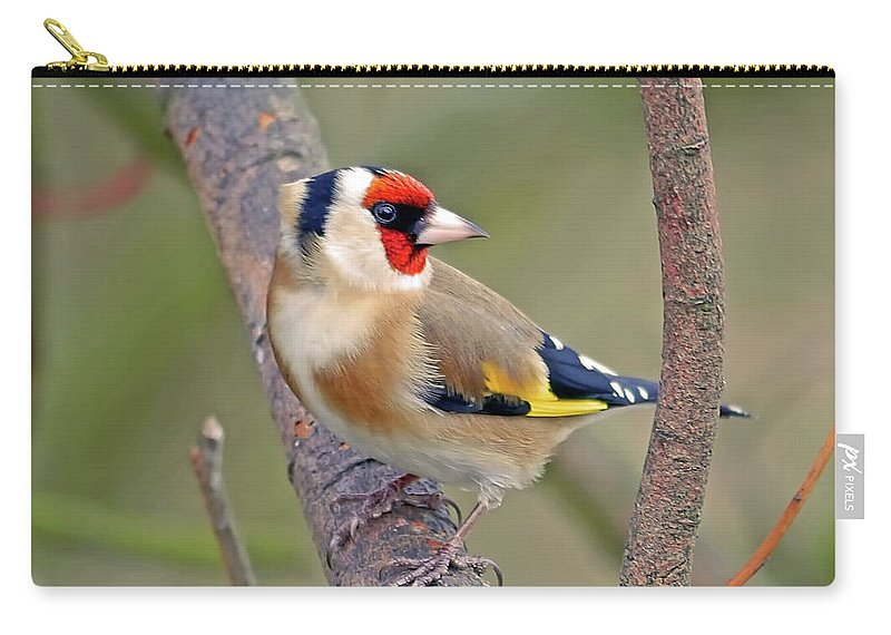 Animal Themes Carry-all Pouch featuring the photograph Goldfinch by Kevspix