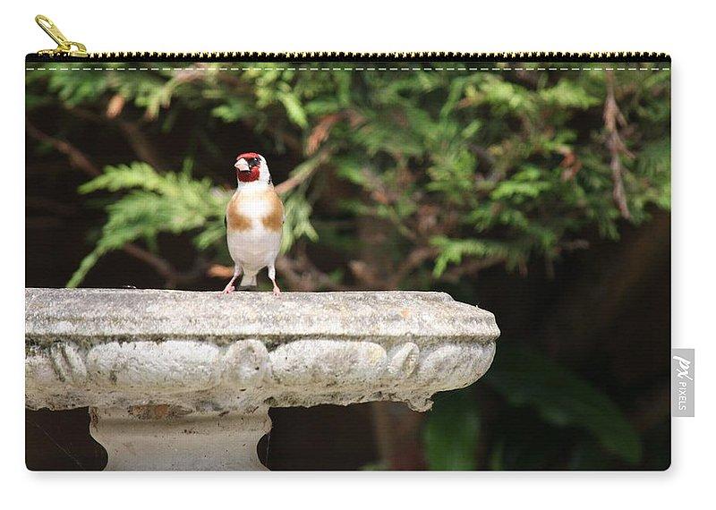 Goldfinch On Birdbath Carry-all Pouch featuring the photograph Goldfinch On Birdbath by Gordon Auld