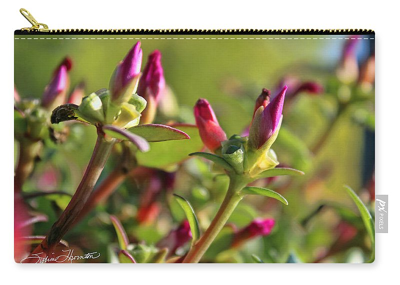 Moss Roses Carry-all Pouch featuring the photograph Good Morning Mr Sun by Sylvia Thornton