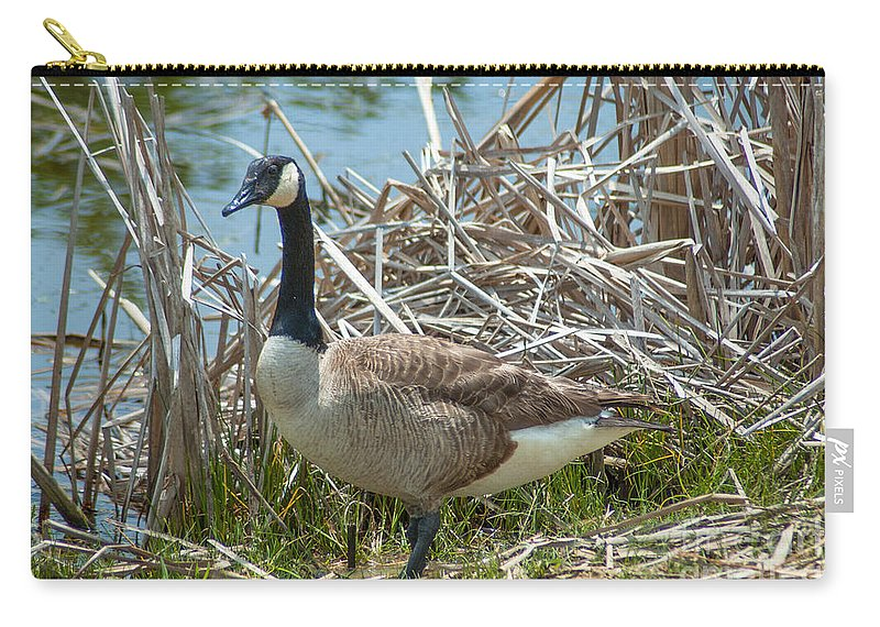 Goose Carry-all Pouch featuring the photograph Goose  by Dale Powell